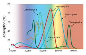 Black Dog Spectrum Graph