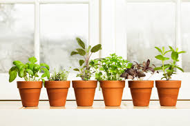 herbs in pots on window sill