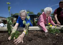 old ladies gardening