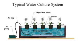 solution culture hydroponics